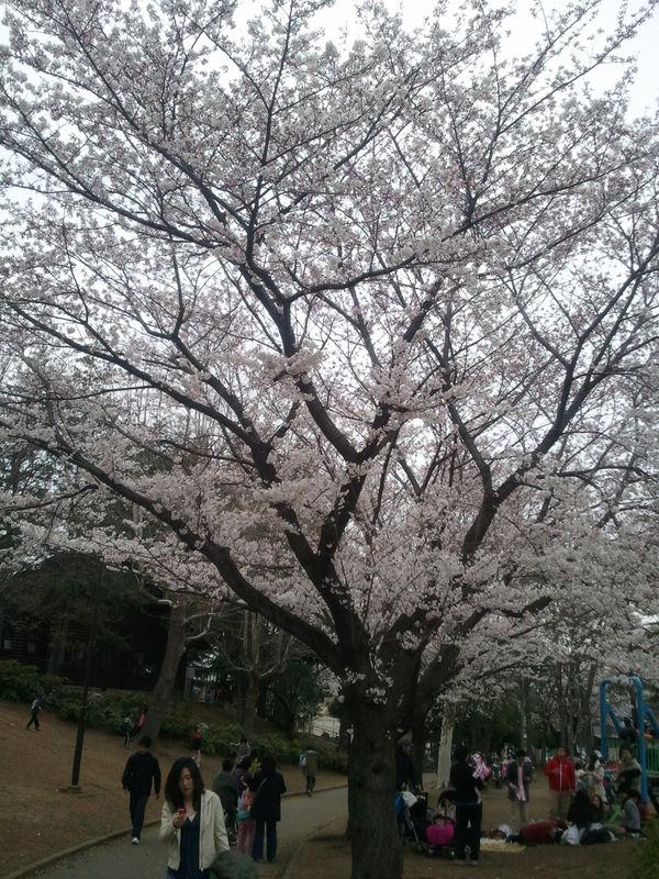 sakanishi.jpg